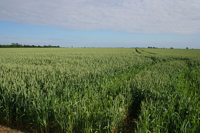 Farmland off Ashing Lane