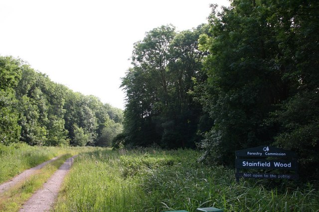 Stainfield Wood