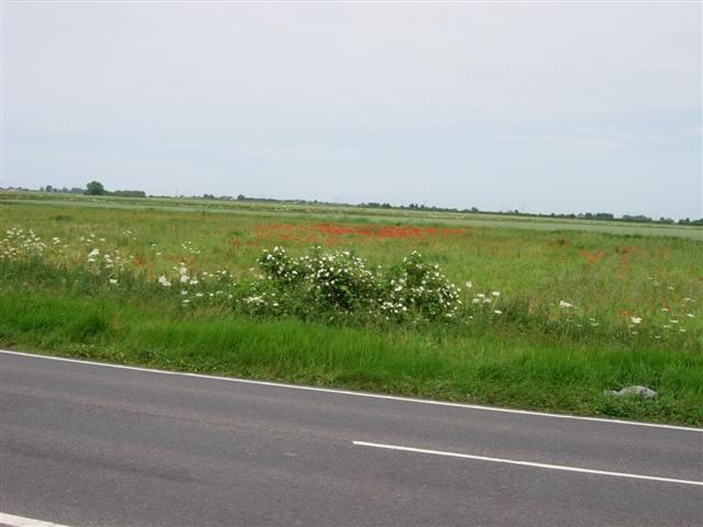 Flat fens landscape near the A19