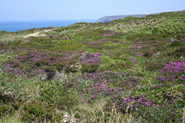 Clifftop Vegetation