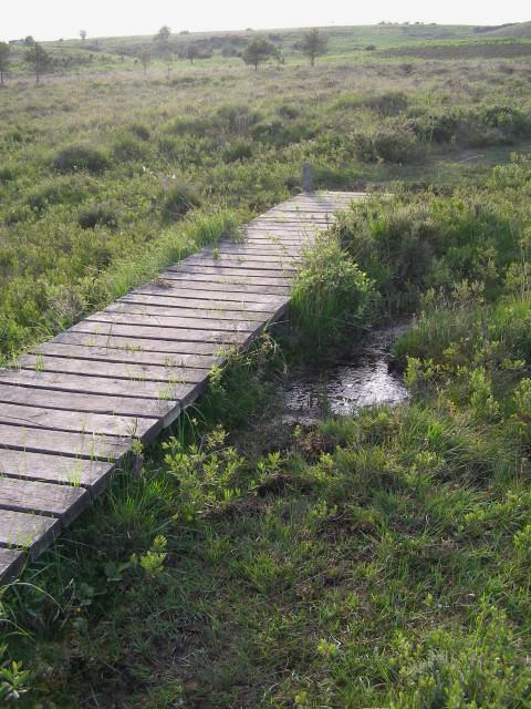 Duckboard walkway across Linwood Bog, New Forest