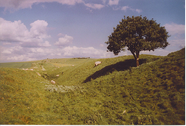The Wansdyke, Looking East to Milk Hill.