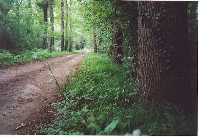 Wey South Path at Three Corner Copse.