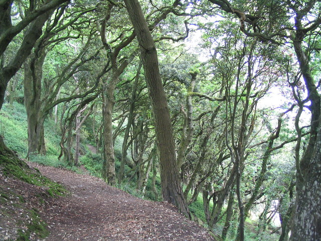 South west Coast Path through oak woodland on Toll point