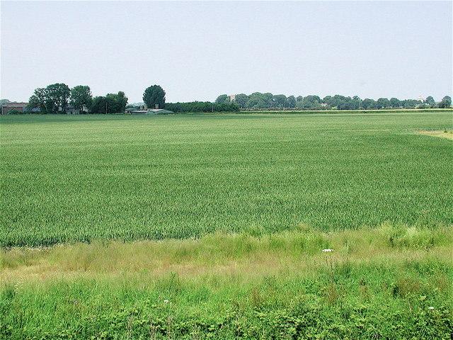 South of Thorp's Farm, Halsham