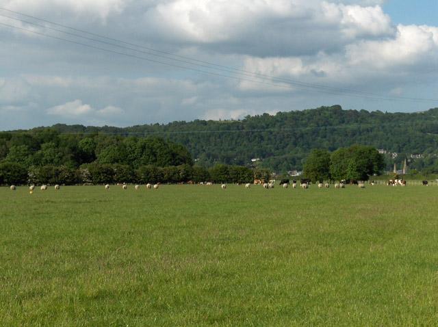 Farmland, Lecropt