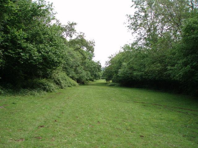 Tor Hill, Wells