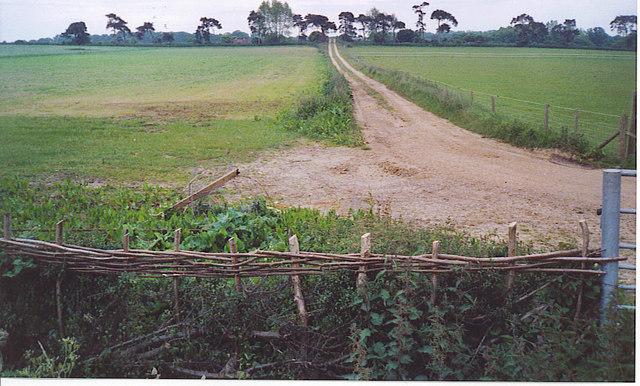 Track Through Fields, Adversane.