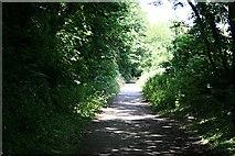 SW6745 : Woodland Path by Tony Atkin