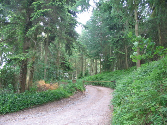 Track to Shootershill Copse