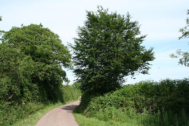 Luppitt: lane to Combeshead