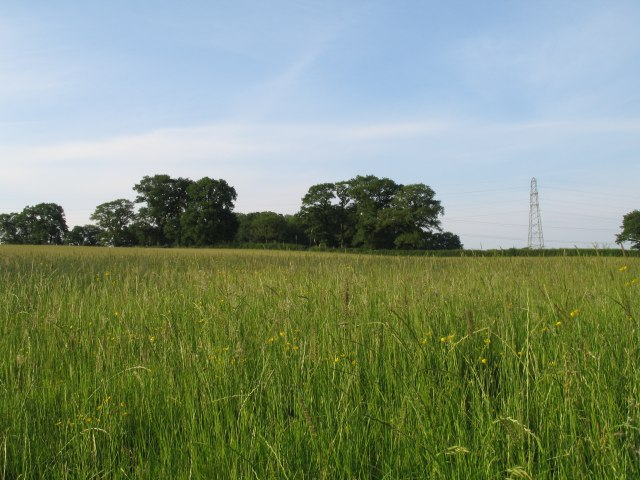 Grassy field near  Broad Lane Farm