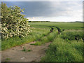 TL0541 : Farmland from Chapel End Road, Houghton Conquest, Beds by Rodney Burton