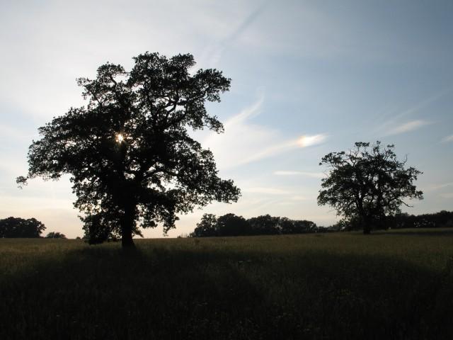 Trees near Broad Lane Farm