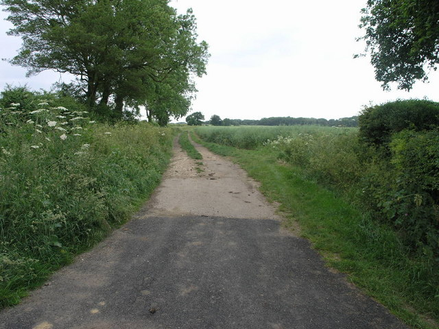 Bridleway to Short Wood
