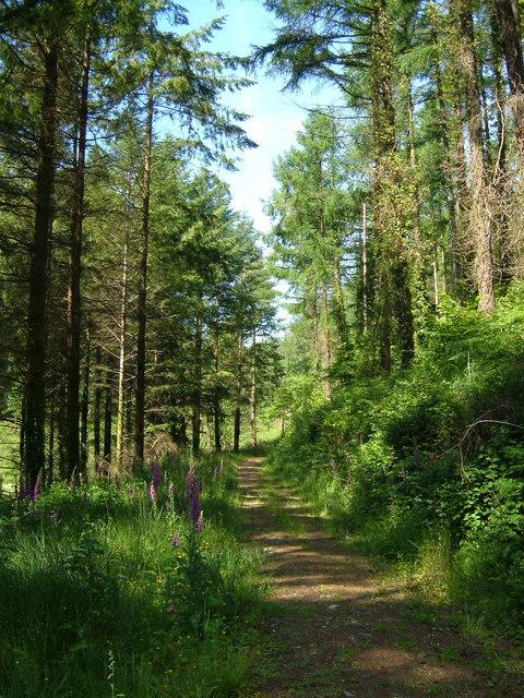 Aveton Wood