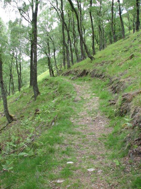 Path through birch woods