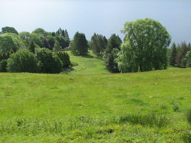 Fields at Fearnan