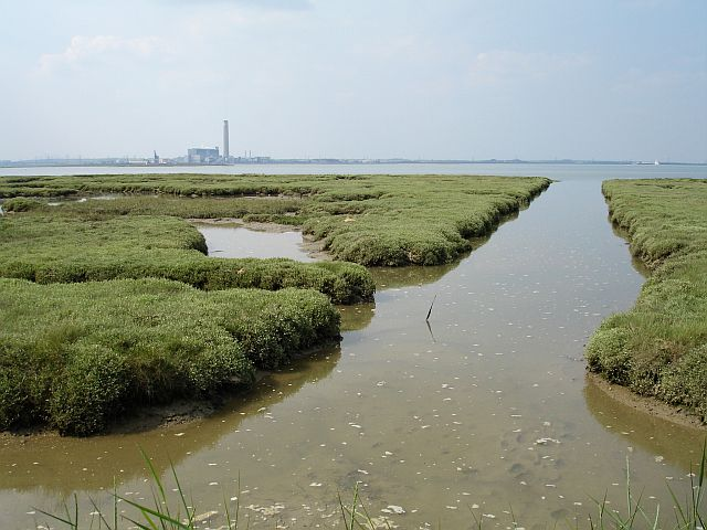 Saltmarsh north of Motney Hill