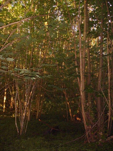 Woodland off Lone Barn Road