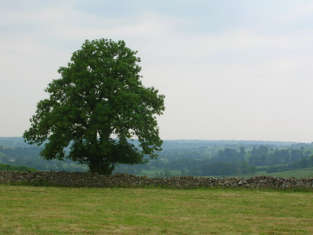 Lone tree overlooking the Dove Valley