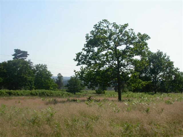 Ockley Common