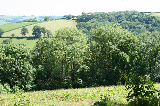 Tiverton: towards Hensleigh Wood