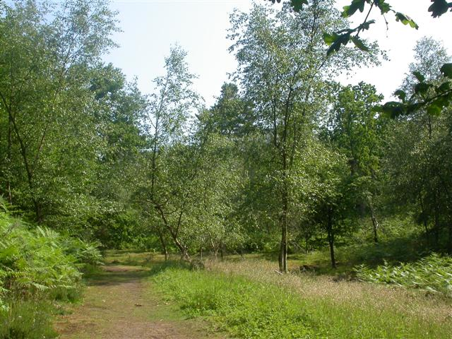 Rodborough Common