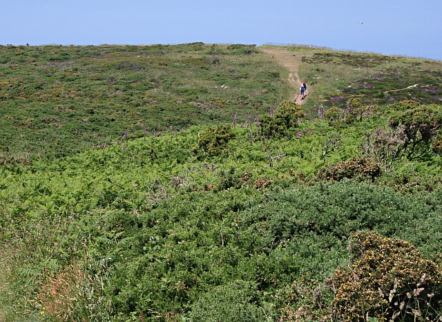 Coast Path on the Clifftop Heathland