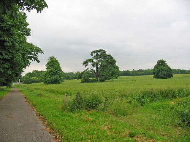 Field of wheat Crichel Dorset