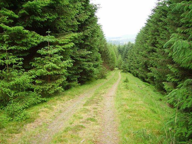 Forest road, Lochurd Hills