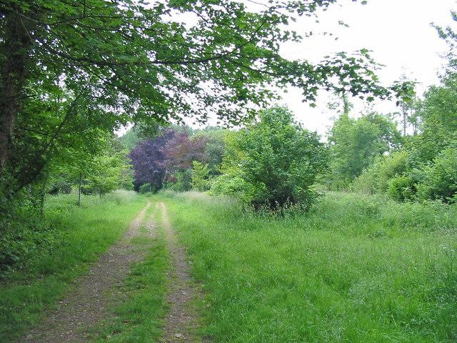 Woodland track Crichel estate Moor Crichel Dorset