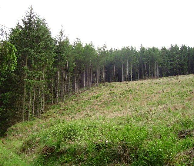 An old vegetation boundary.