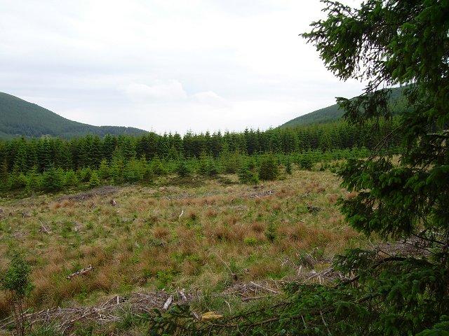 Ladyurd Forest