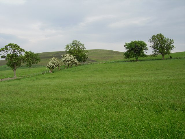 Fields, Ladyurd
