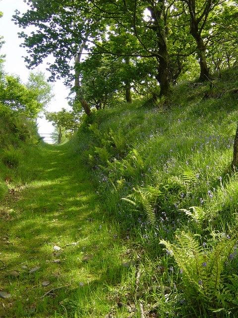 Ferny path
