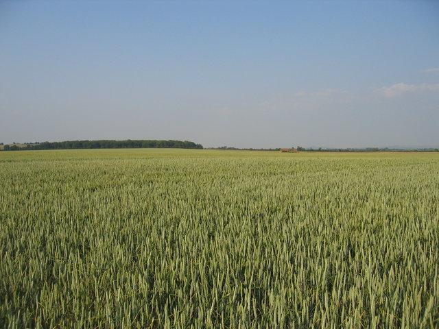View towards Porter's Plantation