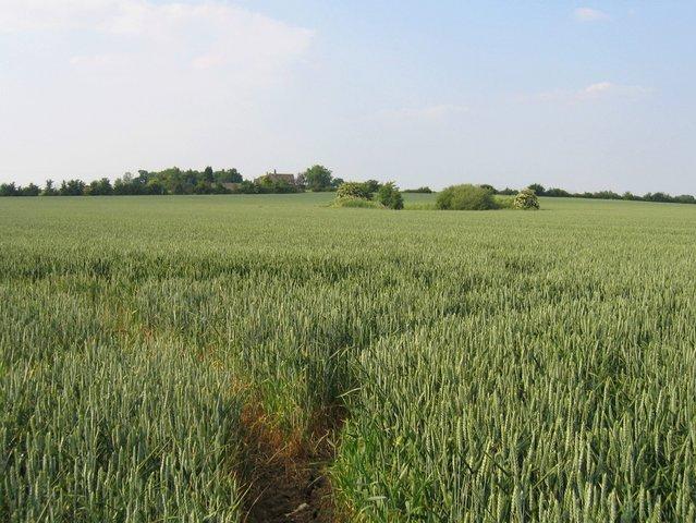 View towards Willersey Barn