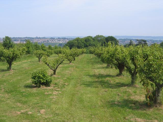 Orchard, Wilsons Lane, East Farleigh, Kent