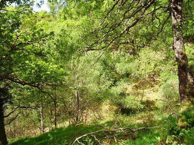 Sunart oak woods