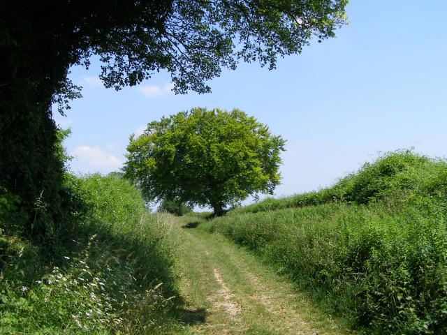 Cheriton Lane