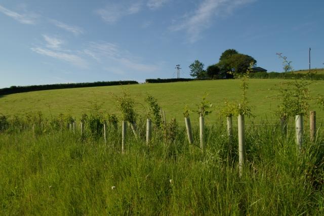 Field near Woods Farm
