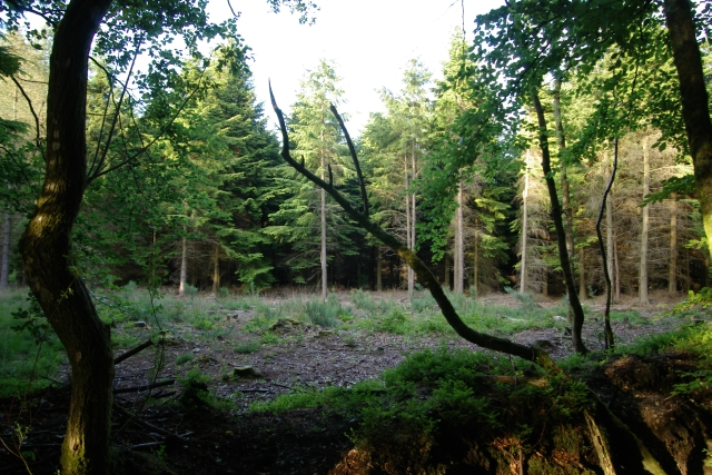Woodland clearing, East Hill Strips