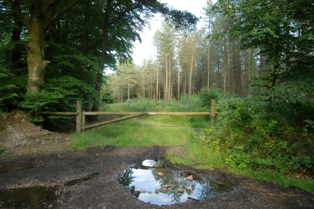 Woodland track and gate, East Hill Strips