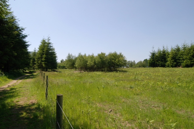 Field in Cann Wood