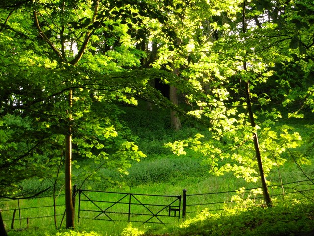 Amenity plantation at Malham Tarn House