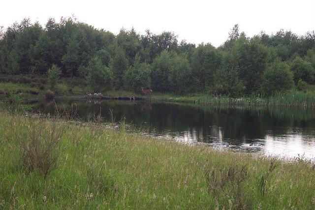 Small Lake Near Chasewater