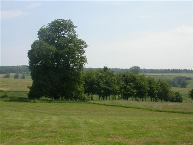 East from Uppark