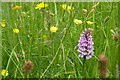SU7917 : Common Spotted Orchid by Ben Gamble