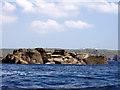 SW3224 : Seals on Tal y Maen by Sheila Russell